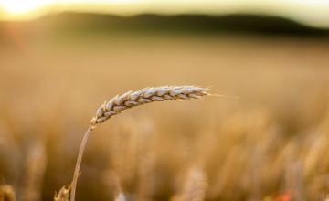 nowe-zasady-egzekucji-komorniczej-wobec-rolnikow